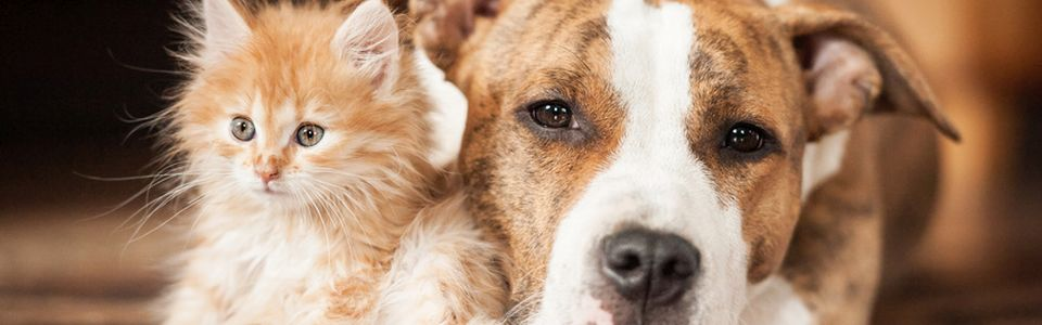 Insektizid gegen Flöhe bei Hunde und Katzen